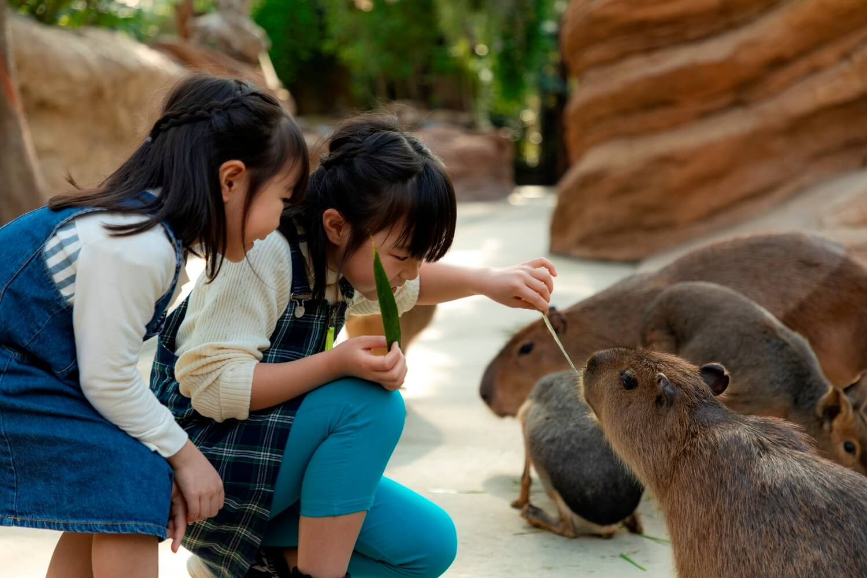 ファミリー旅行におすすめ★花と動物と触れ合おう!「神戸どうぶつ王国」入場券付宿泊プラン